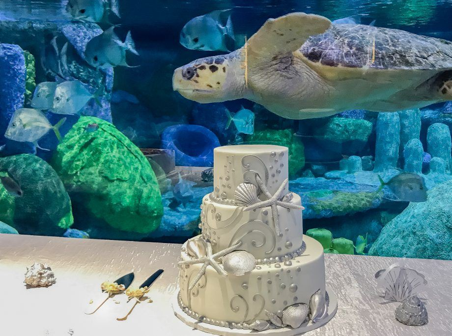 Cake set up by the glass of a turtle tank