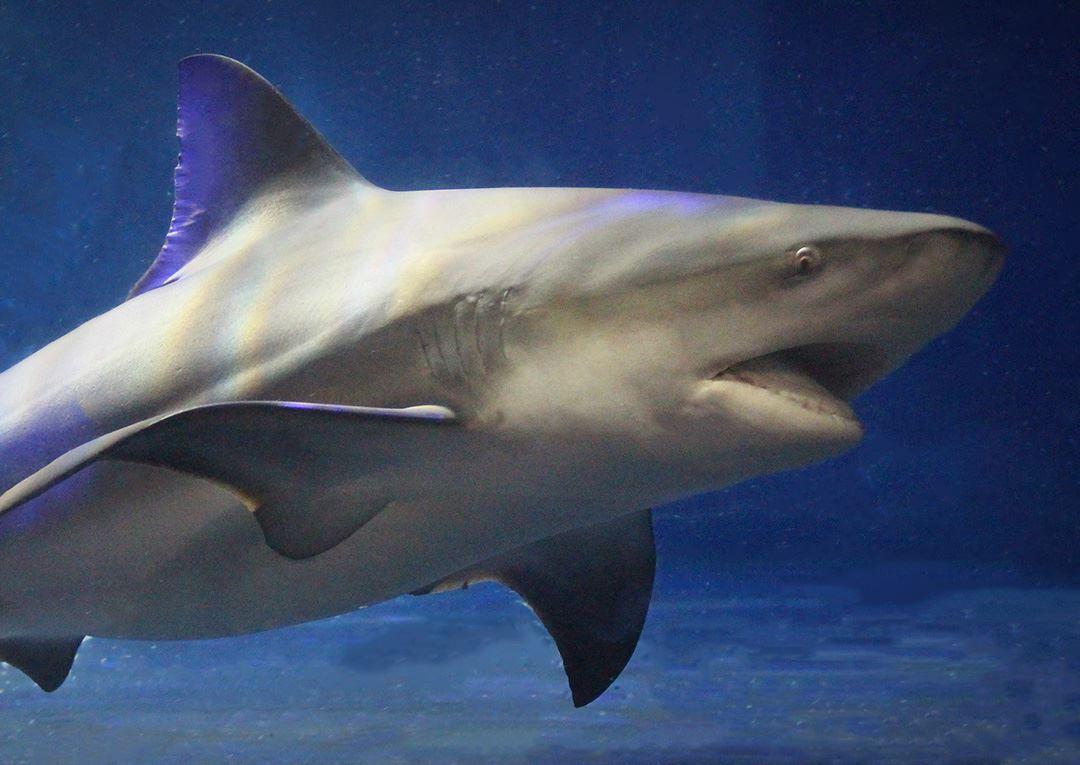 Shark Adventure | Oklahoma Aquarium Jenks, OK