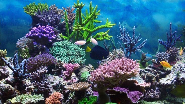 Coral Reef Opens in new window